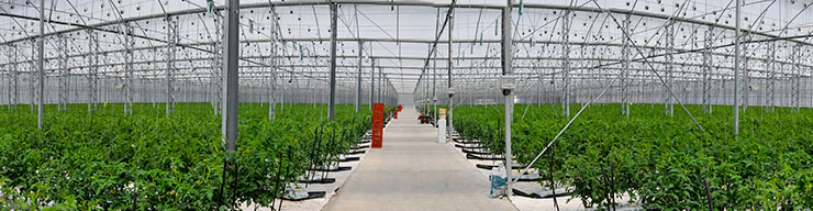 Hydroponic Horticulture