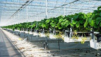 Serre coltivazione idroponica